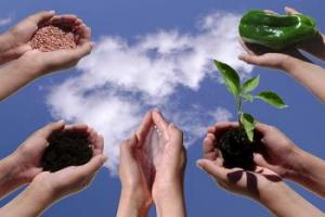 F sets up cupped hands held up against background of bb lue sky with clouds, holding soil, seed, earth, plant, pepper